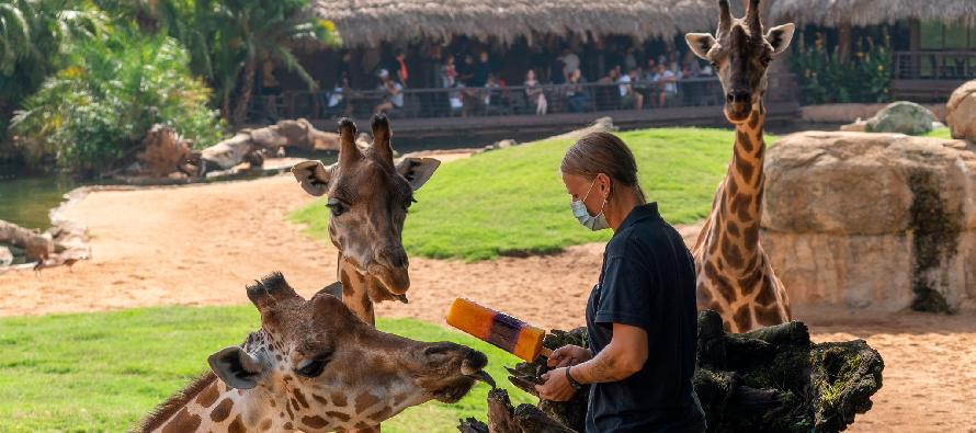 В зоопарке Валенсии животных освежают мороженым и искусственным дождем
