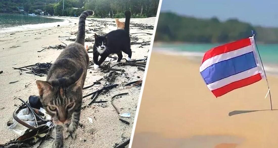 Тысячи несчастных существ теперь бродят вместо туристов по пляжам популярного курорта в Таиланде