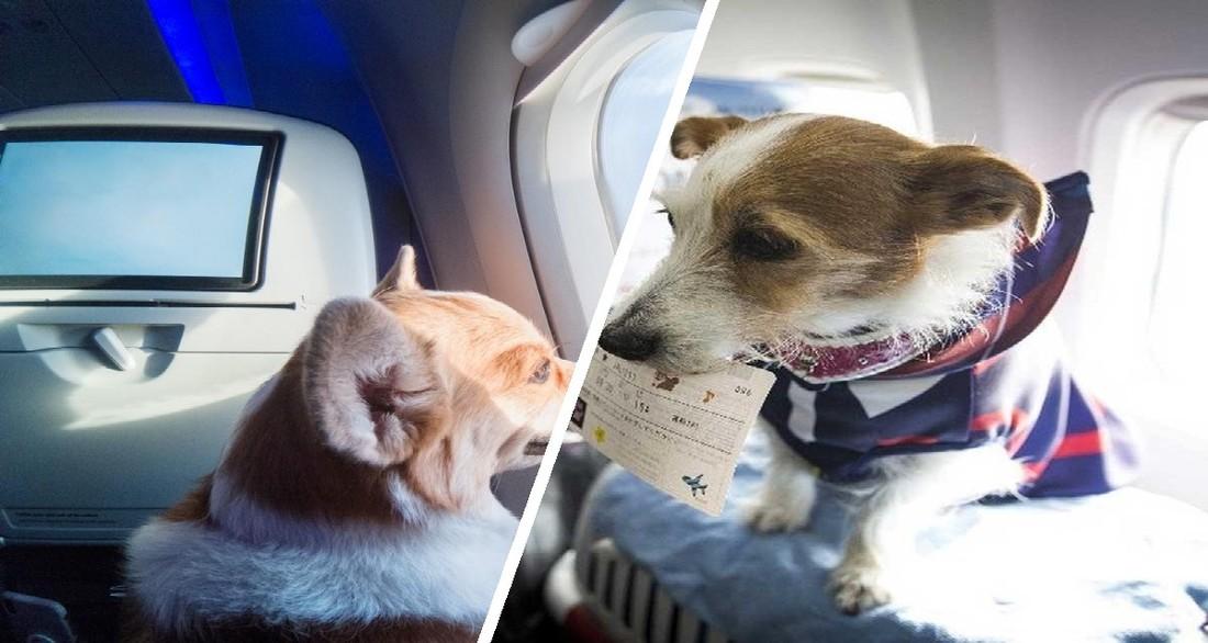 Российская авиакомпания разрешила брать на борт животных в качестве ручной клади