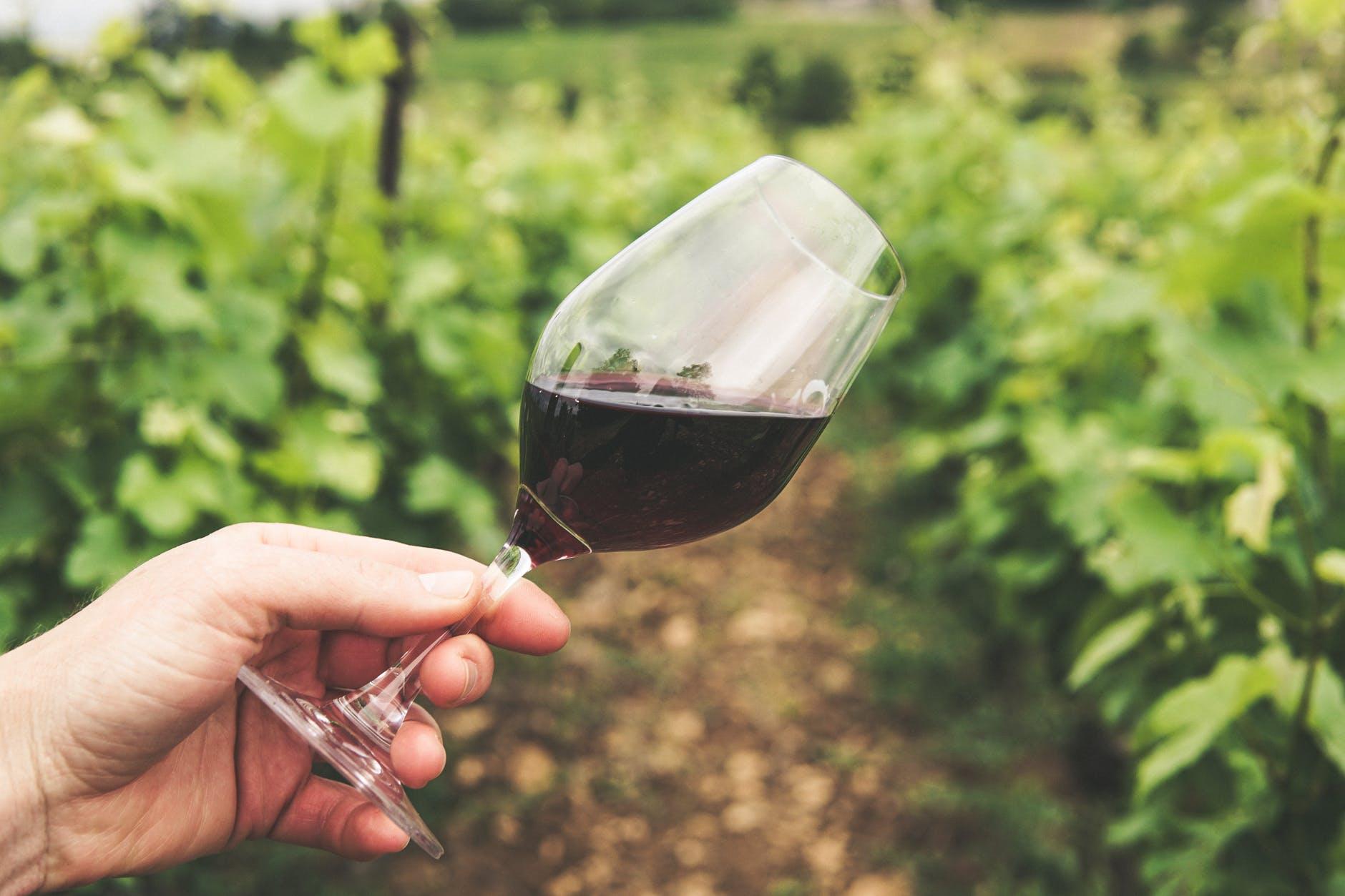 7 испанских виноделен попали в список лучших в мире в 2021 году